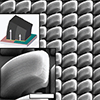 Carbon nanotube microstructures